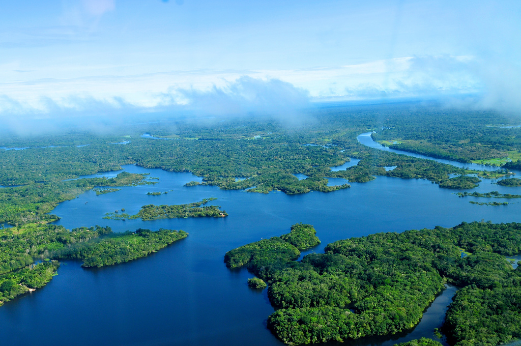 Amazon Rainforest…A Cry to Take Action